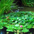 Landscape pond — Stock Photo #4824648