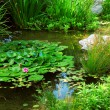Foto de Stock  : Pond landscaping