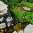 Pond landscaping — Stock Photo