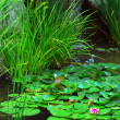 Pond landsaping - Stock Photo