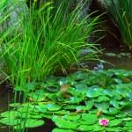 Pond landsaping — Stock Photo
