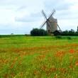 Ветряная мельница и мака поле — Стоковое фото