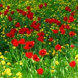 Flower field — Foto Stock