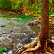 Forest river — Stock Photo #4824714