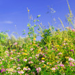 Summer meadow — Stock Photo #4824828