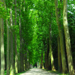 Road and trees - Stock Photo