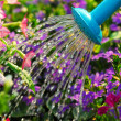 Watering flowers — Stock Photo #4824899