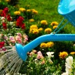 Watering flowers — Stock Photo #4824902