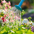 Watering flowers - Stock Photo