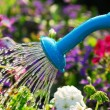 Watering flowers — Foto Stock