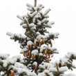Winter spruce - Stock Photo