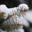 Snowy branch — Stock Photo