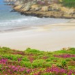 Atlantic coast in Brittany — Stock Photo