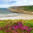 Atlantic coast in Brittany — Stock Photo #4825086