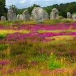 Megalithic monuments in Brittany — Stock Photo #4825120