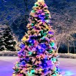 Christmas tree outside — Stock Photo