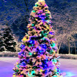 Christmas tree outside — Foto de Stock