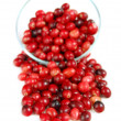 Cranberries in a bowl — Lizenzfreies Foto