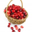 Cranberries in a basket - Stock Photo