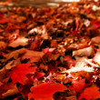 Fallen autumn leaves — Stock Photo