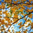 Autumn tree branches — Stock Photo