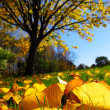 Autumn landscape -  