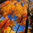 Autumn forest -  