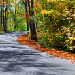 Fall forest road — Stock Photo