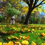 Fall park — Stock Photo