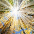 Sunrays in the forest — Stock Photo