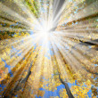Sunrays in the forest - Stock Photo