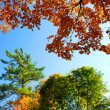 Autumn trees — Foto Stock