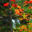 Stock Photo: Fall forest and river