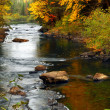 Forest river in the fall — Stock Photo
