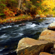 Stock Photo: Forest river in the fall