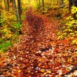 Trail in fall forest — Stock Photo