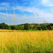 Stock Photo: Country meadow landscape