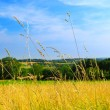 Country meadow landscape — Stok fotoğraf