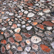 Cobblestone background — Stock Photo #4825400