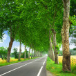 French country road — Stock Photo #4825402
