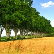 French country road — Stock Photo #4825413