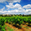 Vineyard in french countryside — Stock Photo
