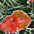Royalty-Free Stock Photo: Frosty leaf