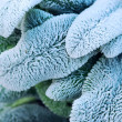 Frosty leaves — Stock Photo #4825547