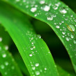 Raindrops on grass — Stock Photo