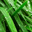Raindrops on grass - Stock Photo