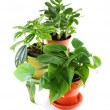 assorted houseplants — Stock Photo