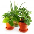Assorted houseplants - Stock Photo