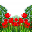 Red spring tulips — Stockfoto