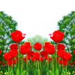 Stock Photo: Red spring tulips